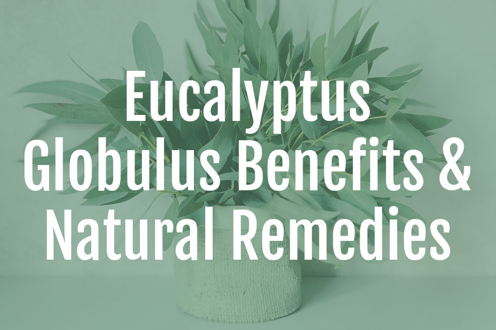 Eucalyptus Globulus Benefits
